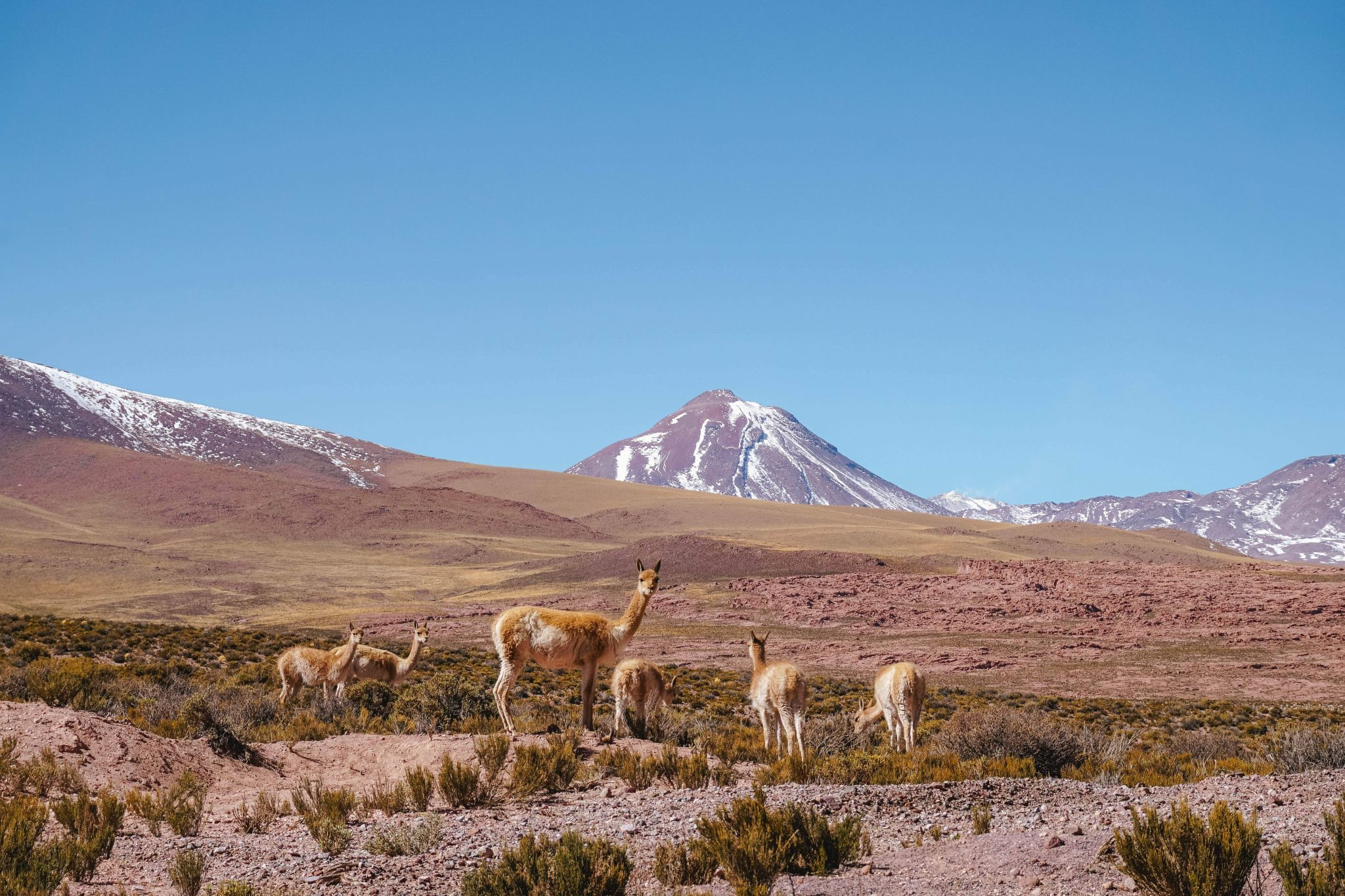 Self-driving guide-to-Atacama-Desert-itinerary-must-see-spots-33