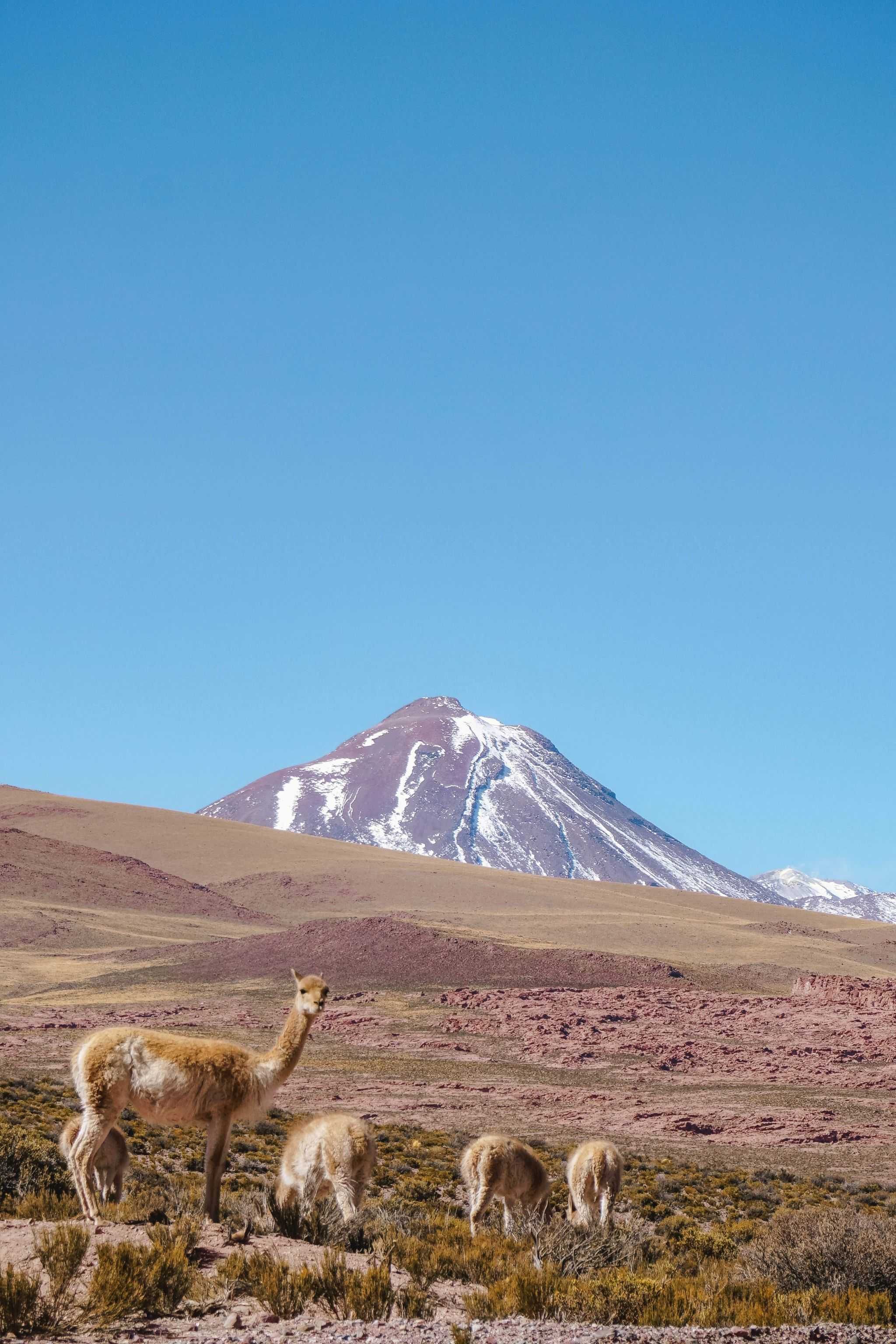 Self-driving guide-to-Atacama-Desert-itinerary-must-see-spots-35